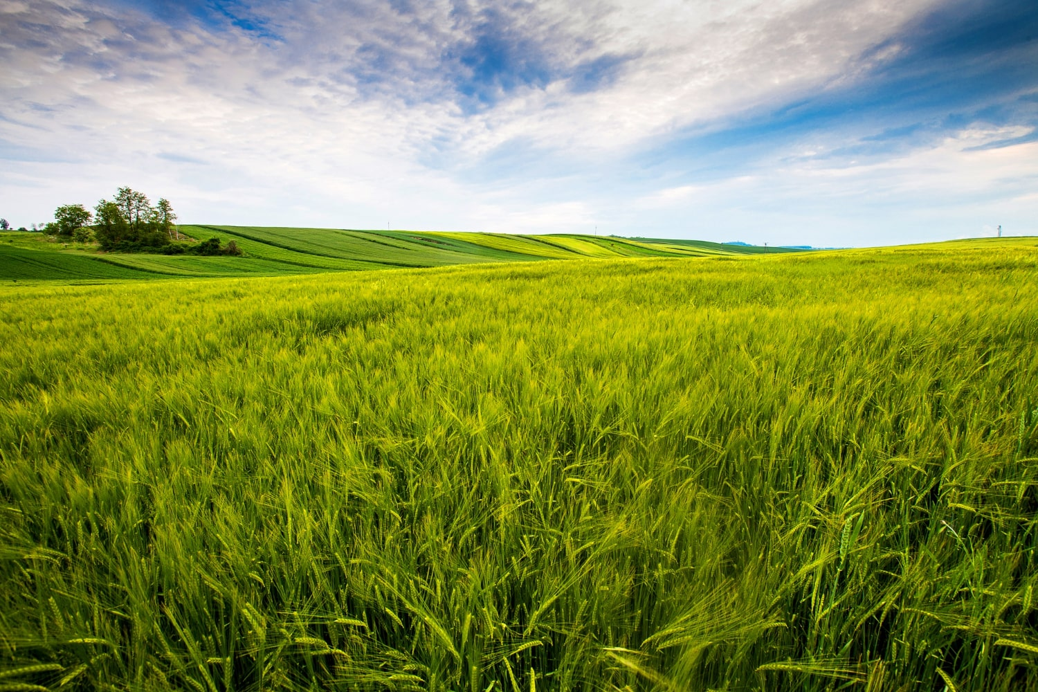 606da2a55cac3_countryside-field-sunny-day-in-the-countryside.jpg